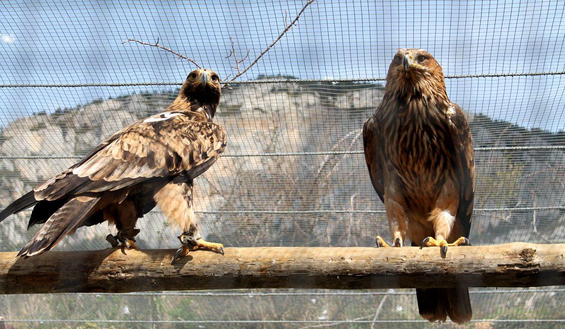Visita amb nens al Zoo del Pirineu a El Solsonès