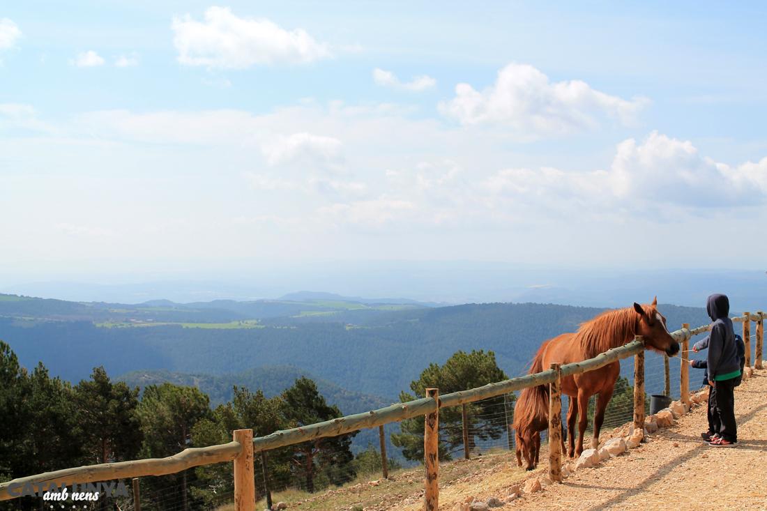 Cavalls a l'instal·lació de Zoo del Pirineu