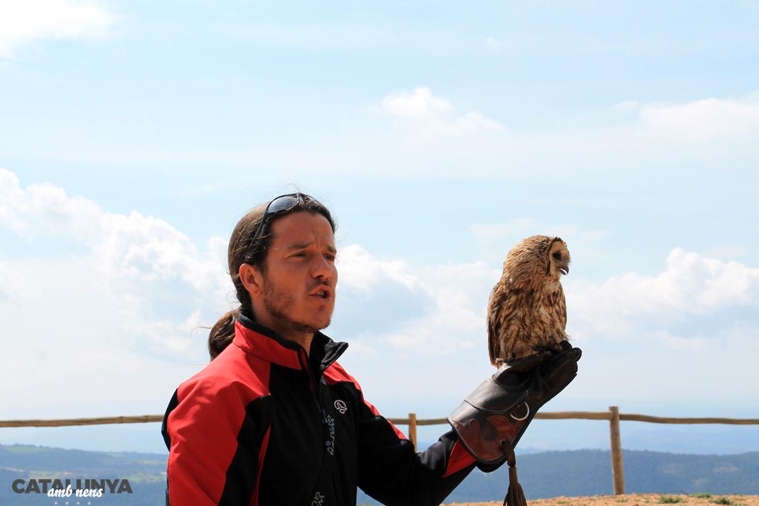 Exhibició d'aus rapinyaires
