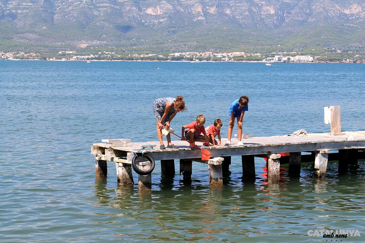 L'estructura és una refugi per peixets i crustacis de la badia