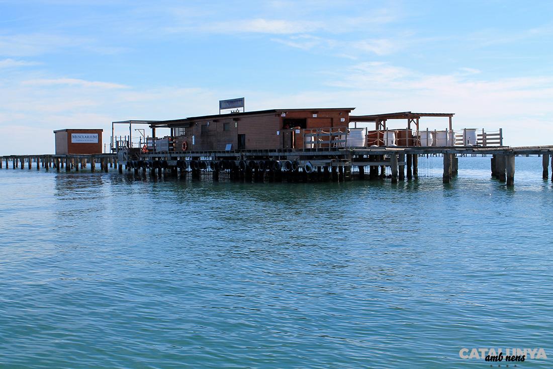 Musclarium a sobre d'una plataforma envoltada de mar
