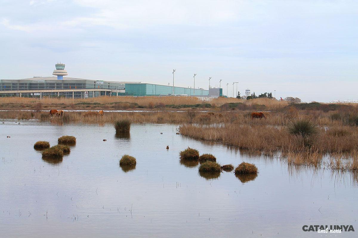 L'Aeroport de Barcelona a pocs metres de les zones humides