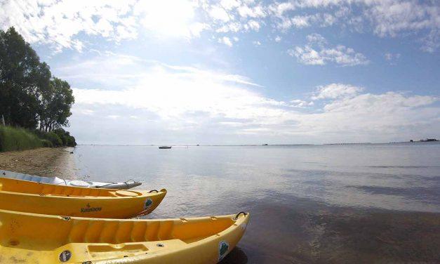 Navegar amb kayak pel Delta de l'Ebre