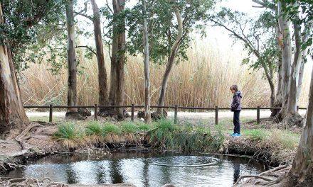 Ullals de Baltasar, les curioses surgències d'aigua al Delta de l'Ebre